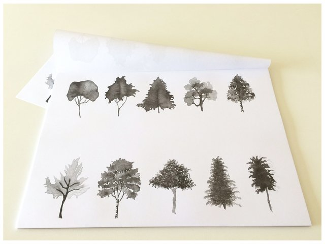 individuales de papel - BOSQUE