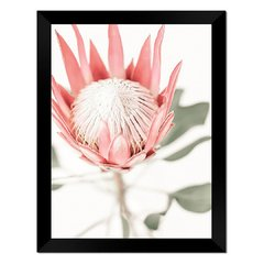 Quadro Decorativo king Protea na internet