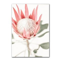 Quadro Decorativo king Protea