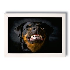 QUADRO ROTTWEILER DOG na internet