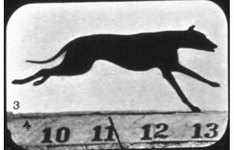 Muybridge 48 páginas en internet