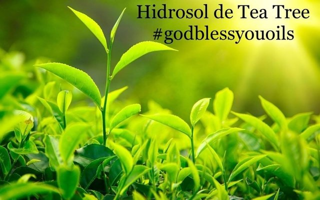 HIDROSOL DE TEA TREE 60ml - comprar online
