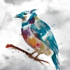 Blue Jay - Stephane Fontaine - comprar online