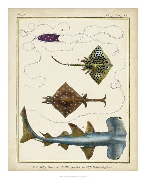 Antique Rays & Fish I - Chevillet - comprar online