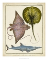 Antique Rays & Fish II - Chevillet - comprar online