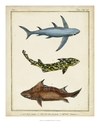 Antique Rays & Fish III - Chevillet - comprar online