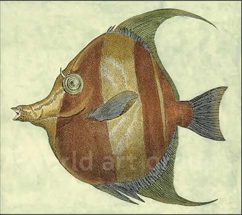 Small Angel Fish II - Vision Studio - comprar online