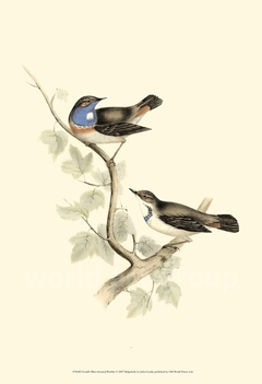 Gould's Blue-throated Warbler - John Gould