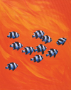 10 Black-Tailed Humbugs - Keith Siddle - comprar online