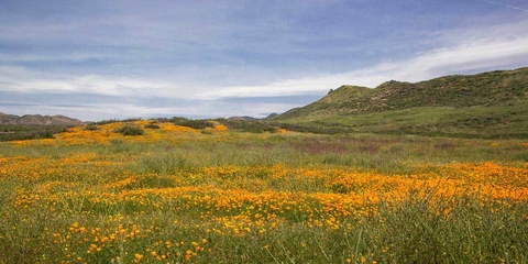 Spring Vista with Wildflowers - Barbara Markoff