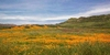 Spring Vista with Wildflowers - Barbara Markoff - comprar online