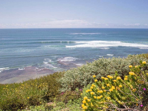 Surf and Protea, Encinitas - Barbara Markoff