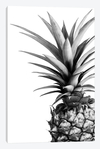 Pineapple (BW) - Lexie Greer na internet