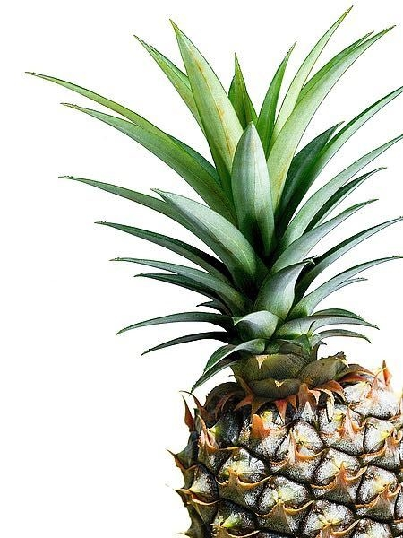 Pineapple (color) - Lexie Greer - comprar online