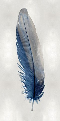Blue Feather on Silver I - Julia Bosco