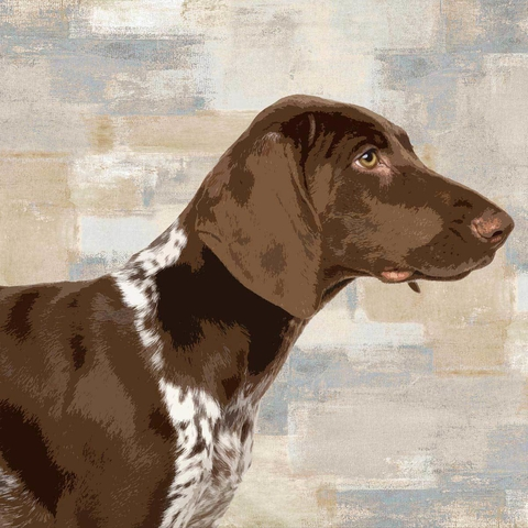 poster cachorro Pointer