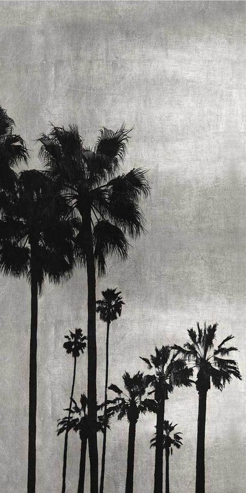 Palm Silhouette on Silver I - Kate Bennett
