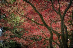 Autumn Beauty - Tim Oldford