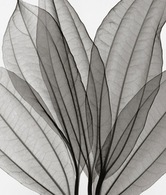 Leaf Collection - A - Steven N. Meyers - comprar online