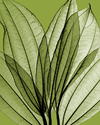 Leaf Bouquet, Green - Steven N. Meyers - comprar online
