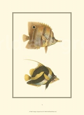 Antique Tropical Fish II - Vision Studio - comprar online