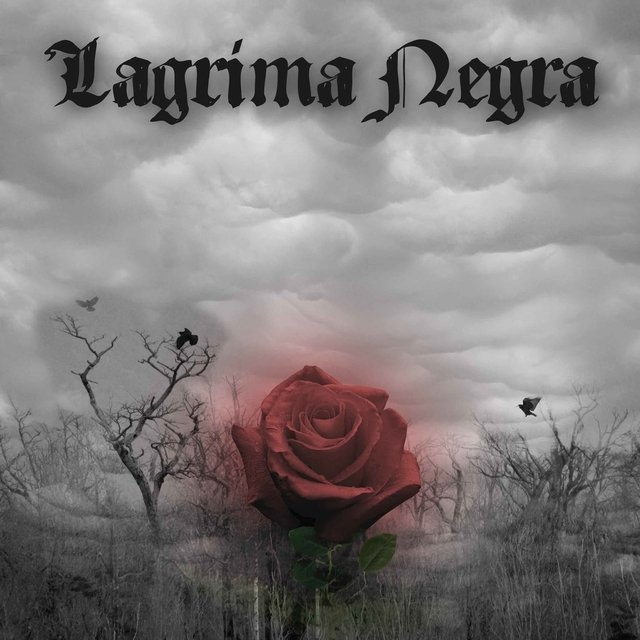 Lagrima Negra - The Flower of My Loneliness (Cd Duplo)