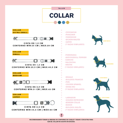 KIT- COLLAR BE HERO VIOLET - be-dog.com