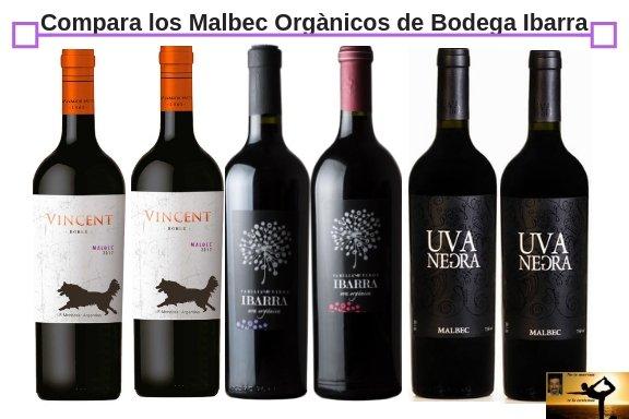Compara varietal orgànico Bodega Ibarra