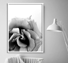 CUADRO BLACK AND WHITE ROSE