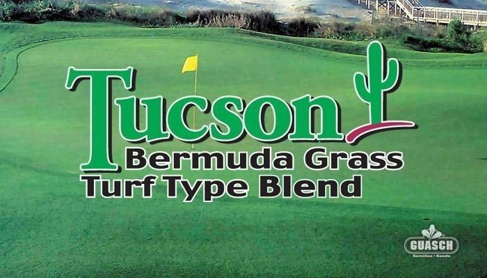 Bermuda Grass Blend Tucson Blend