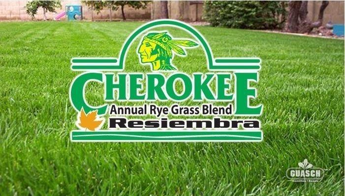 Raigras Anual Blend Cherokee (resiembra anual)