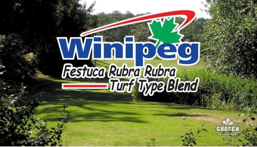 Festuca Rubra Blend Winipeg Blend