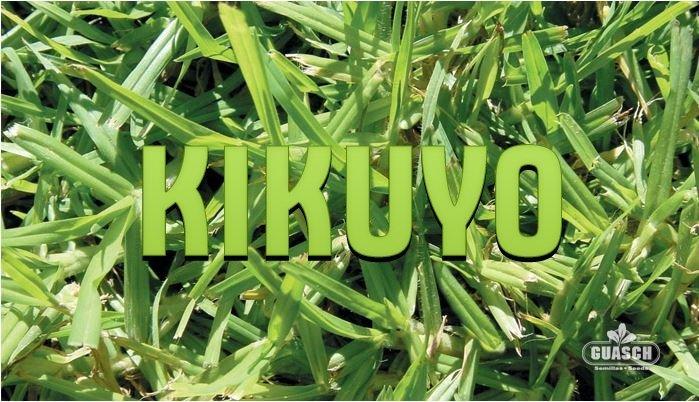 Kikuyo Común
