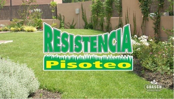 Resistencia Pisoteo Mix Mezcla