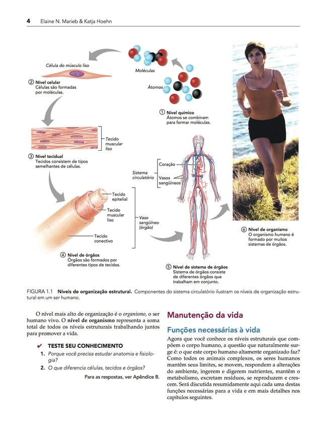 Excelente Anatomía Y Fisiología Sexta Edición Marieb Inspiración ...