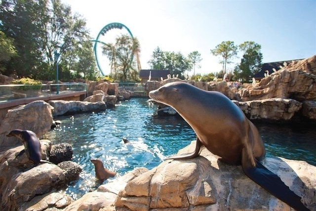 SEA WORLD 2 DAY - CHOOSE SEAWOLRD, BUSCH GARDENS TAMPA, AQUATICA ORLANDO OR ADVENTURE ISLAND TAMPA - buy online