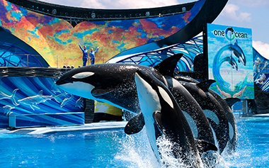SEA WORLD 1 DIA - Vai Aonde - vaiaonde.com - Parques Orlando, Walt Disney World,  Ingressos