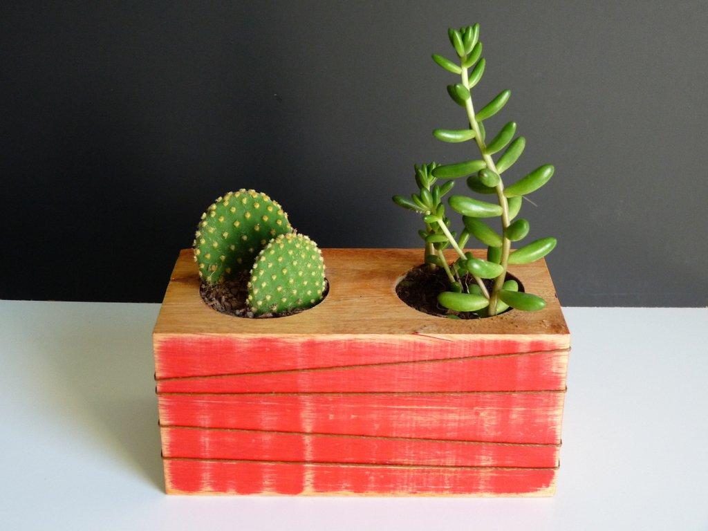 Liston Madera con 2 Cactus y Suculentas