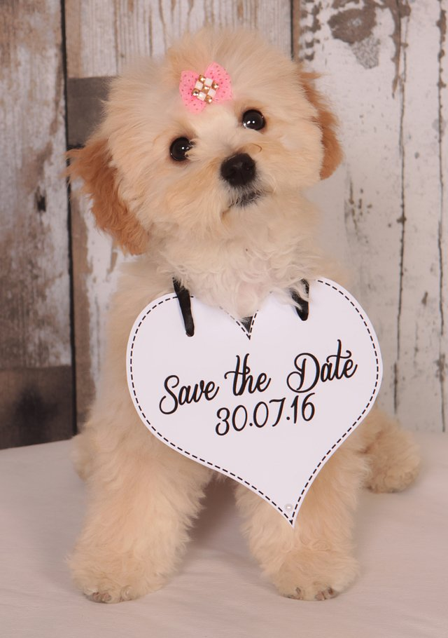 Plaquinhas Save the Date para os Pets