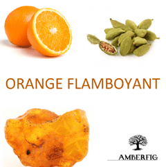 Orange Flamboyant - Amberfig