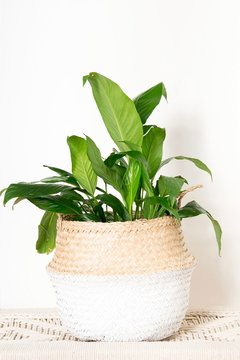 Seagrass basket  blanco grande
