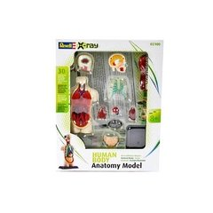 Anatomia: Corpo Humano - Tronco Kit p/ Montar - Revell - comprar online