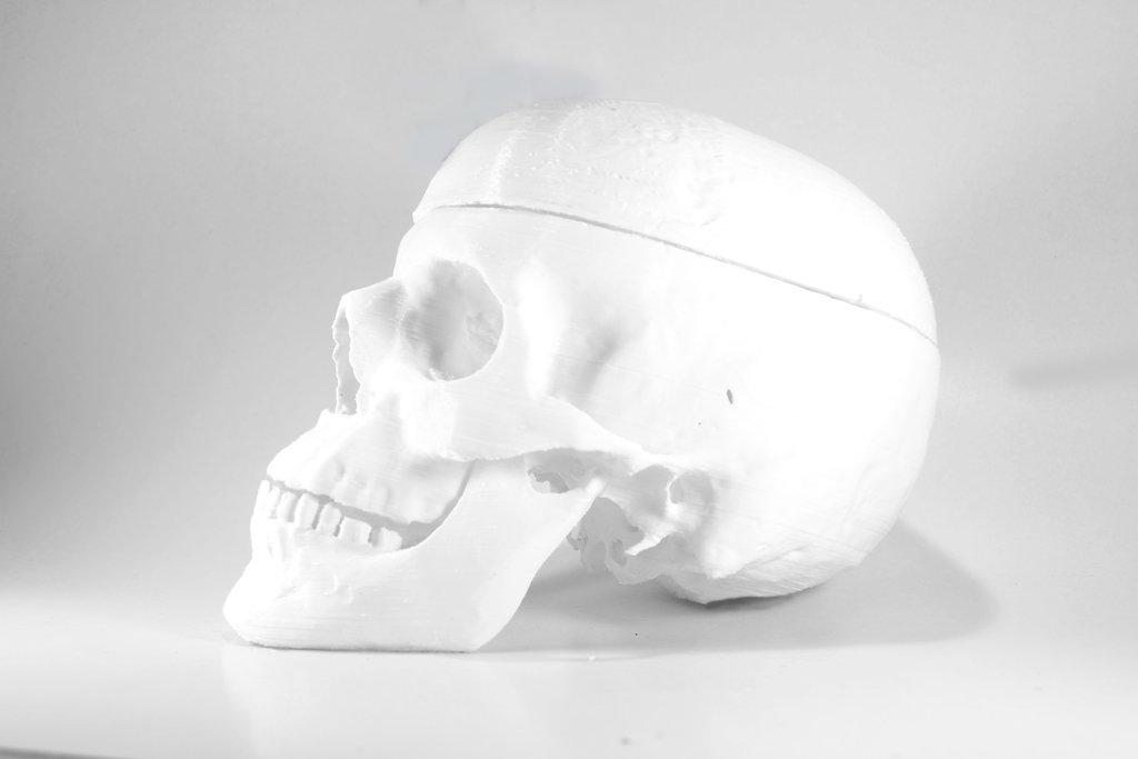 Biomodelo endocráneo/exocráneo