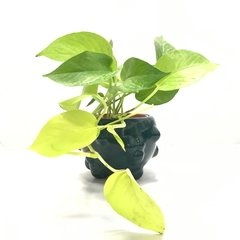 POTHUS LEMON - SMALL