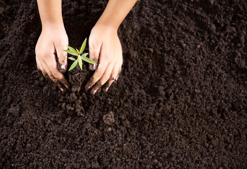 Mãos plantando muda na terra.