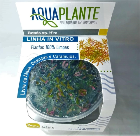 Planta Natural Rotala sp. H'ra - Aquaplante
