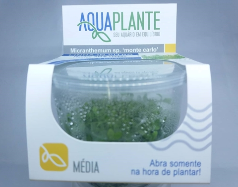 Planta Natural Micranthemum sp Monte Carlo - Aquaplante