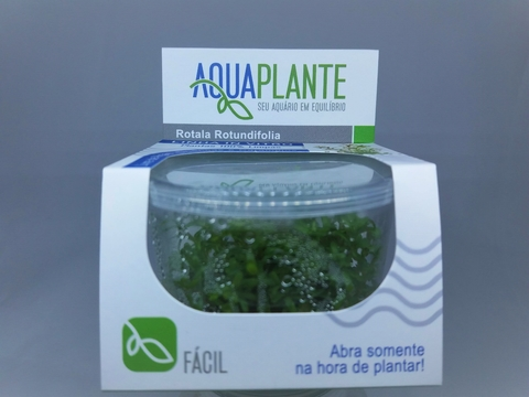 Planta Natural Rotala Rotundifolia- Aquaplante