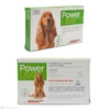 Power Ultra perros en internet